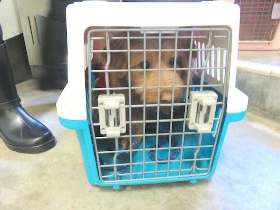 ケージに入る犬の写真