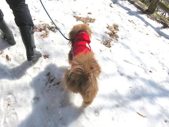 雪道を歩く犬の写真