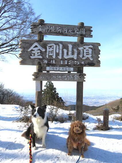 金剛山と犬の写真