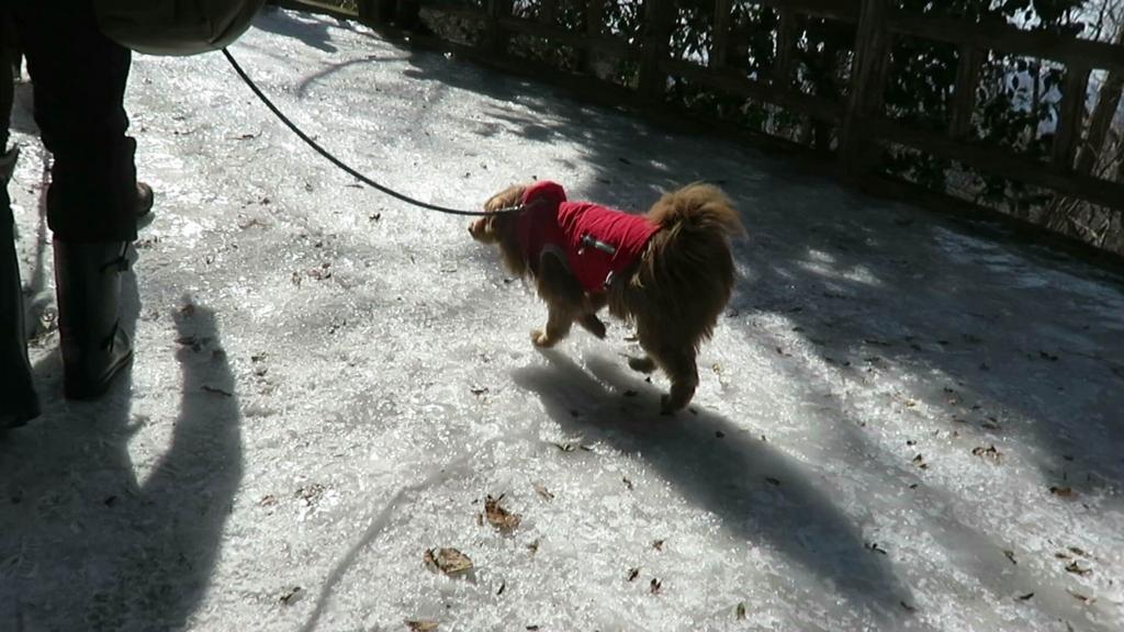 アイスバーンを登る犬の写真