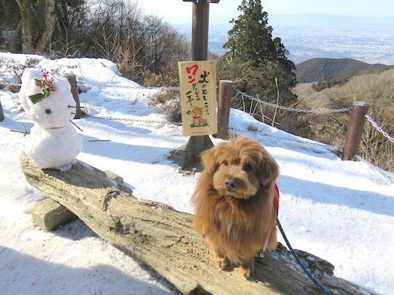 雪だるまと犬の写真