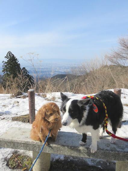 犬二匹の写真