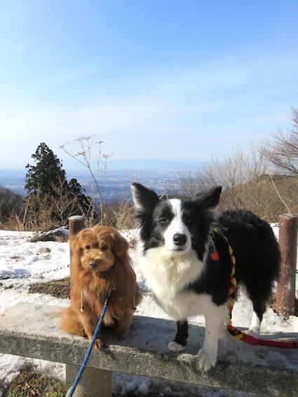 山と犬の写真