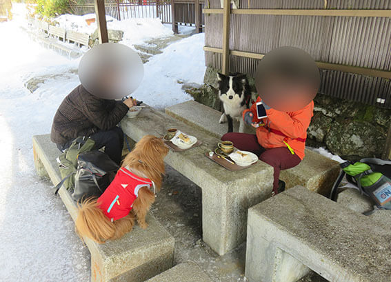 山の上で休憩する犬の写真