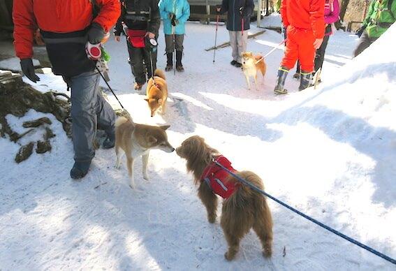 雪山と柴犬の写真