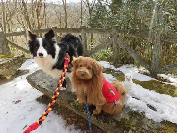 雪山と犬の写真