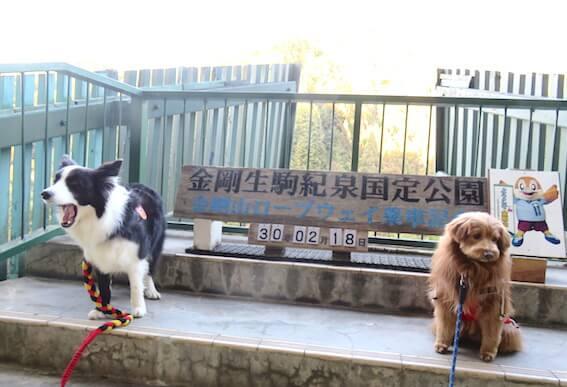 ロープウェイ乗り場の犬の写真