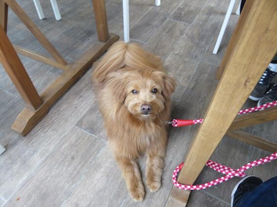 カフェでくつろぐ犬の写真