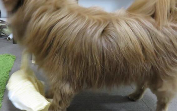 イタズラする犬の写真