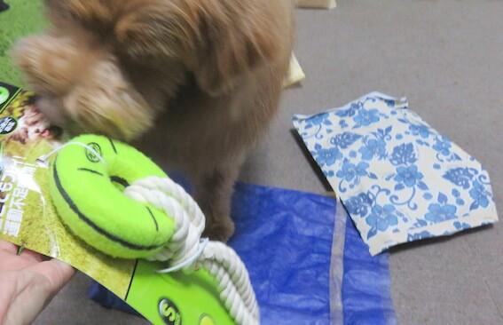おもちゃをくわえる犬の写真