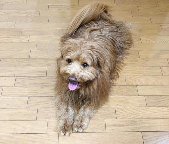 床に寝そべる犬の写真