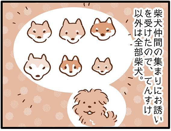 柴犬漫画のイラスト