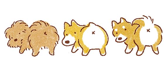 犬のお尻のイラスト