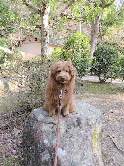 岩の上に登る犬の写真