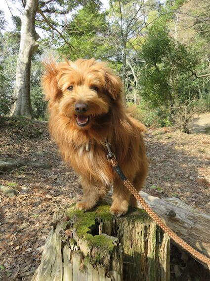 丸木の上に登る犬