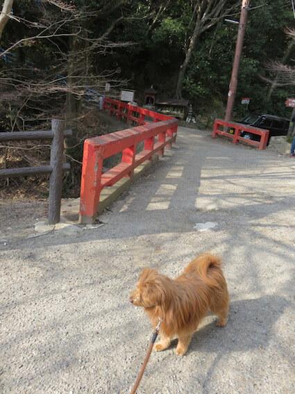 赤い橋と犬の写真