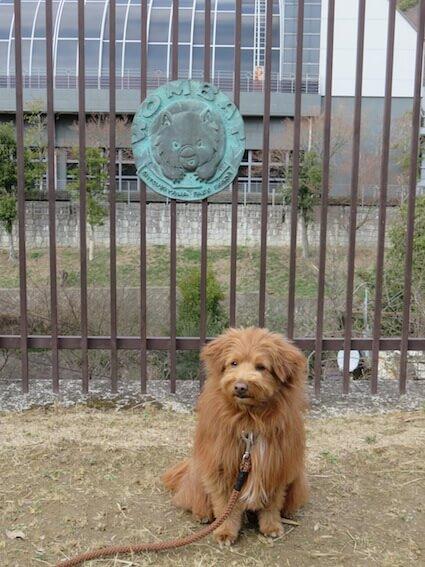 ウォンバットのマークと犬の写真