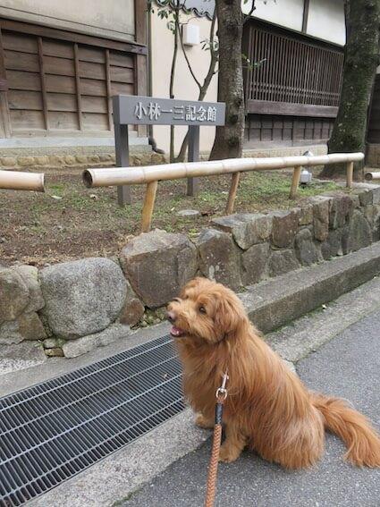 小林一三記念館と犬