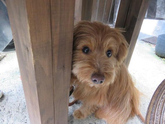 柱の陰に隠れる犬の写真