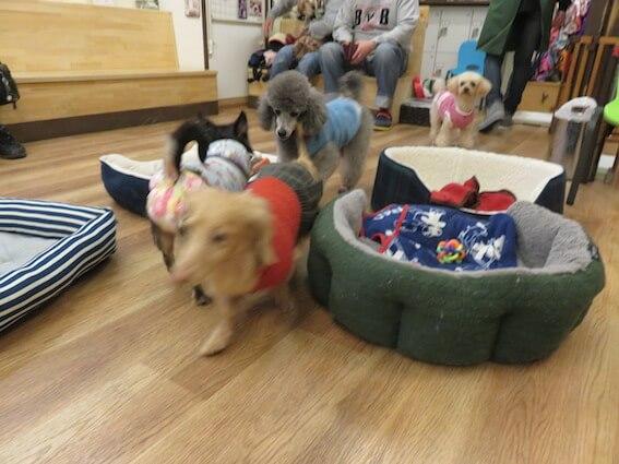 保護犬カフェ川西店の店内の写真