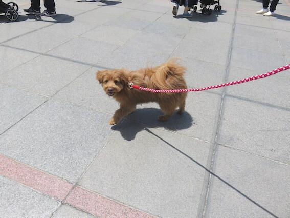 嬉しそうに見上げる犬の写真