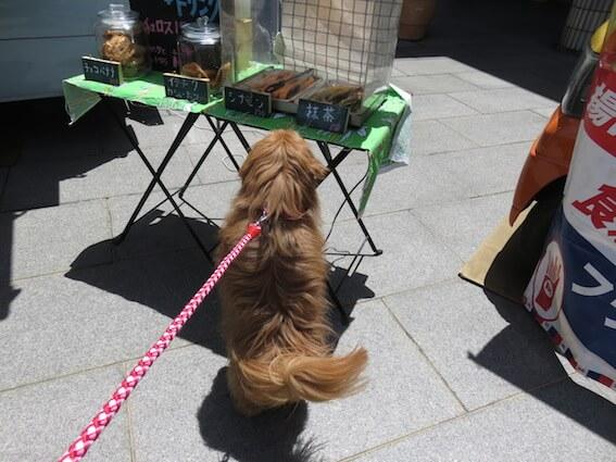 チュロスを見る犬の写真