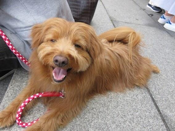 笑顔の犬の写真