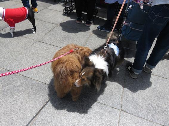 犬の挨拶の写真