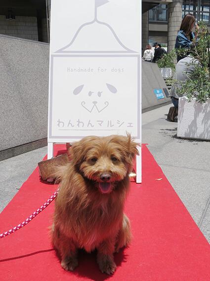 撮影ブースで記念撮影する犬