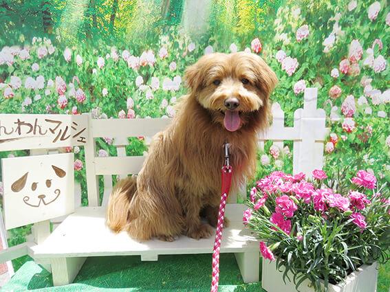わんわんマルシェの犬の写真