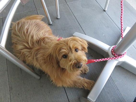 リードが絡んでしまっている犬の写真
