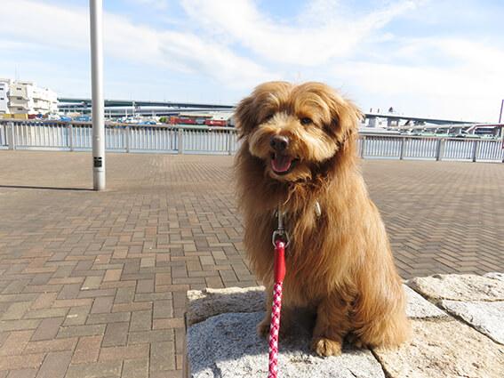 海と犬の写真