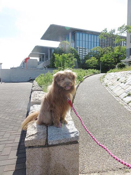 美術館と犬の写真