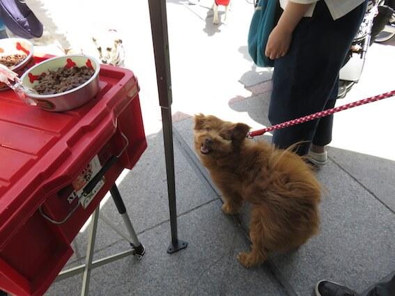 変顔の犬の写真