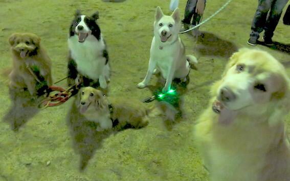 ゴールデンレトリバー、ミニチュアダックスフンド、ボーダーコリー、MIX犬の写真