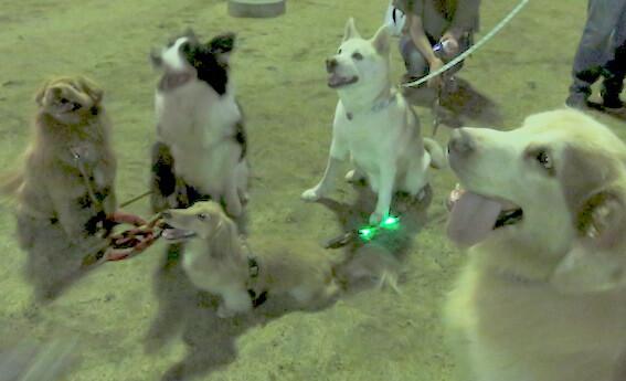 犬が集合している写真