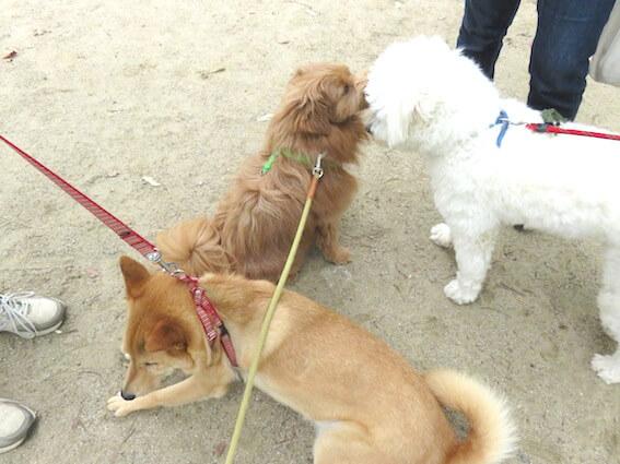 白い犬と茶色い犬の写真