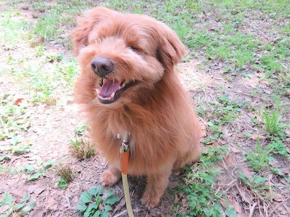 笑っている犬の写真