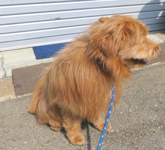 警戒中の犬の写真