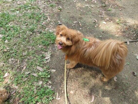 散歩中こっちを見てくる犬の写真