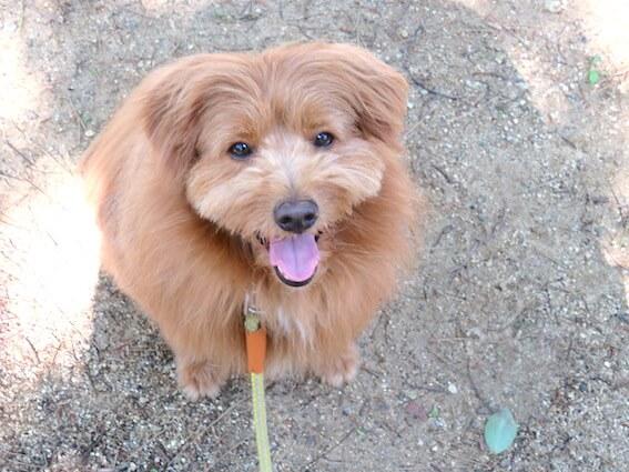 笑顔で見上げてくる犬の写真
