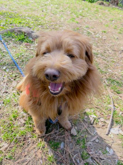 笑う犬の写真