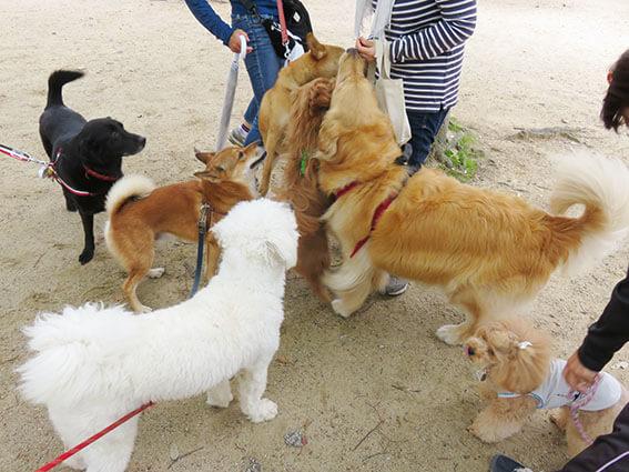 色んな犬種の犬が集まっている写真