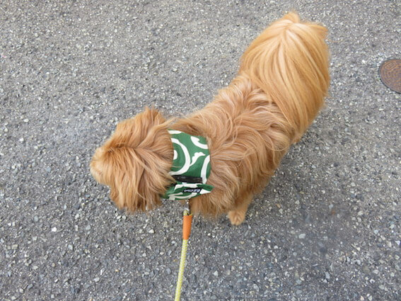 保冷剤を巻いた犬の写真