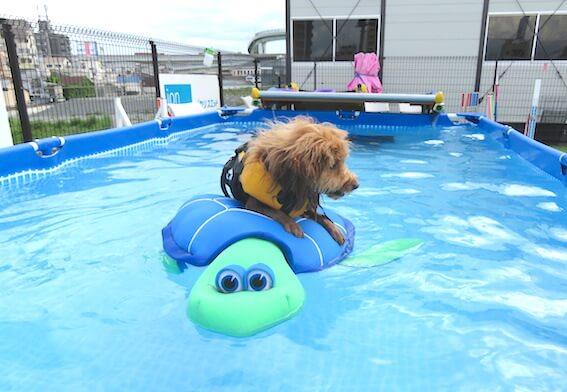 亀のおもちゃに乗る犬