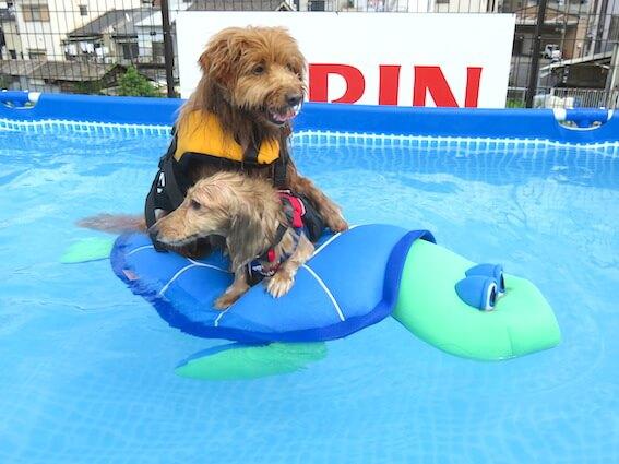 亀に乗る犬達の写真