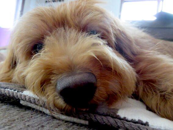 鼻でか犬の写真