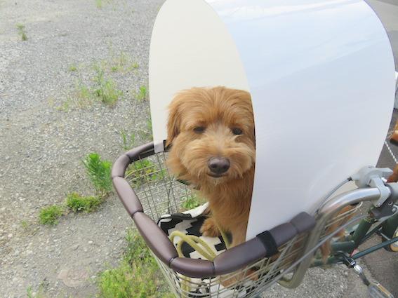 自転車用サンバイザーを付けて犬が入っている写真