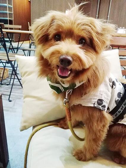 浴衣を着た犬の写真