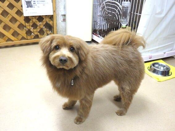 無言で見上げる犬の写真